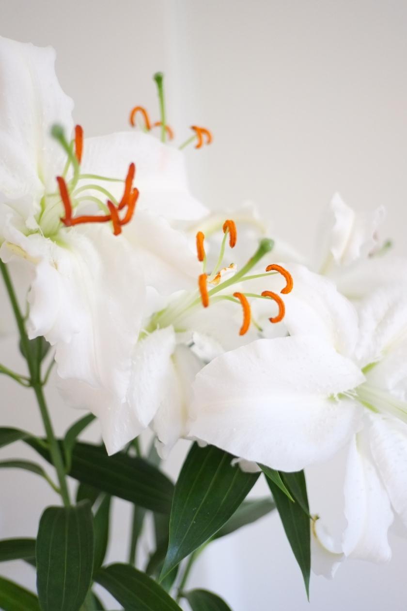 Kukat | Kauniit neliot