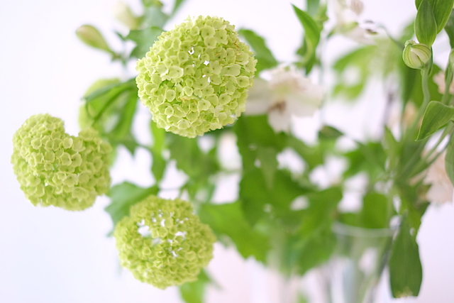 Vihrea kimppu 5 : Kauniit neliot